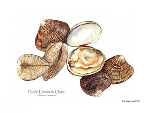 Shellfish Print: Clams, Pacific Littleneck