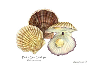 Shellfish Print: Scallops, Pacific Sea