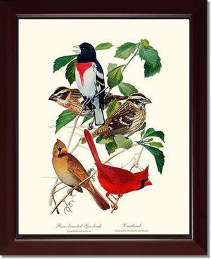 Grosbeaks Cardinals