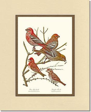 Grosbeaks Finches