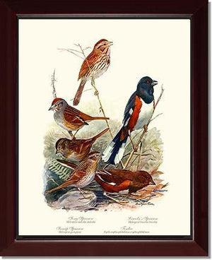 Bird Print: Sparrows Towhees