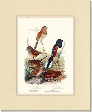 Sparrows and Towhees