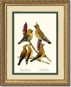 Bird Print: Wax Wings