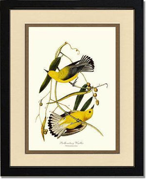 Bird Print: Warbler, Prothonotary