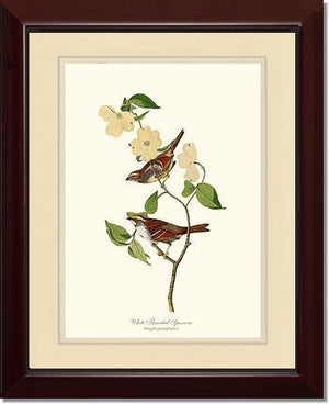 Bird Print: Sparrow, White-throated