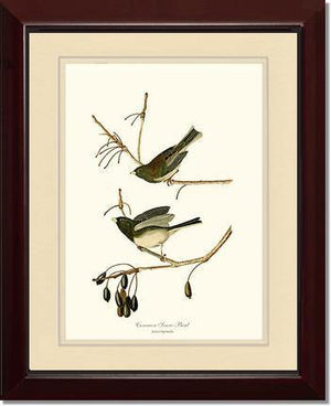 Bird Print: Snowbird  Dark-eyed Junco