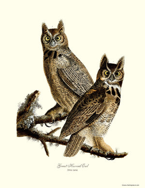 Audubon Great Horned Owl Wall Art Print