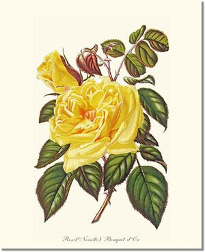 Rose Print: Bouquet d Or