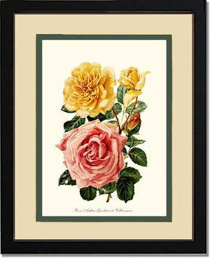 Rose Print: Roses Willowmere