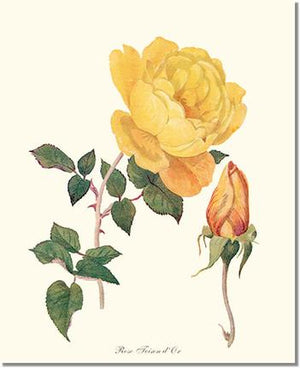 Rose Print: Toison d'Or