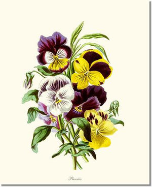 Flower Floral Print: Pansies