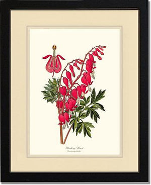 Flower Print: Bleeding Heart