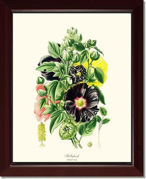 Flower Print: Hollyhock
