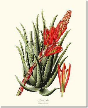 Flower Print: Aloe, Tree