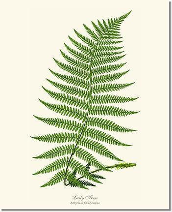 Fern Botanical Prints