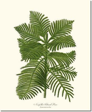 Tree Print: Norfolk Island Pine Tree