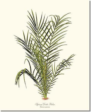 Tree Print: Spiny Date Palm Tree