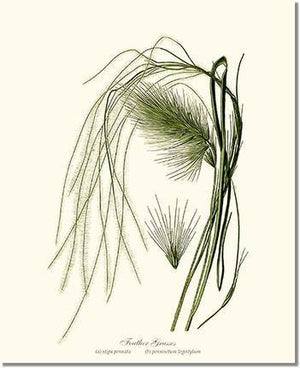 Tree Print: Feather Grasses