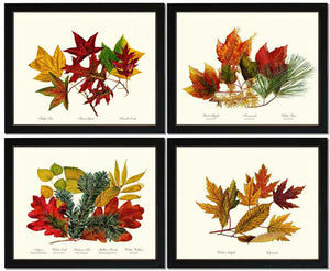 Autumn Wall Art Print Set - Leaves