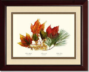 Tree Leaf: Maple-Tamarack-Pine in Autumn Color
