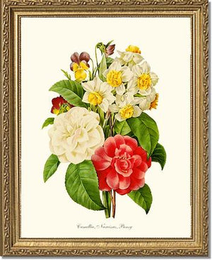 Camellia, Narcissus, Pansy