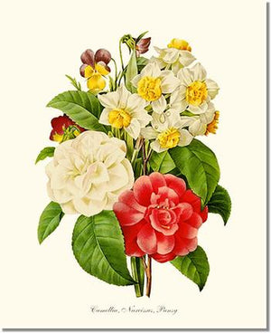 Flower Print: Camellia, Narcissus, Pansy