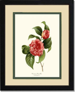 Flower Print: Camellia, Common Red