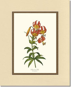Flower Print: Lily, American