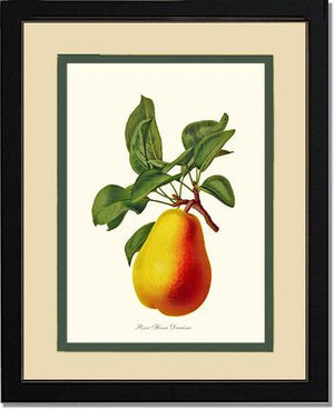 Fruit Print: Pear, Henri Decaisne