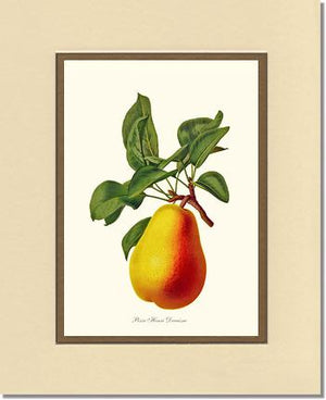 Pear, Henri Decaisne