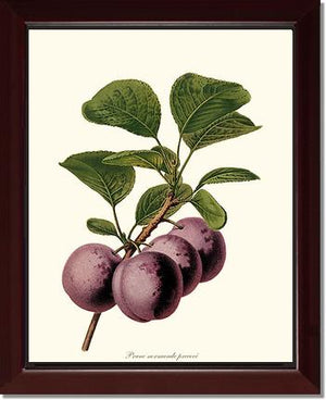 Plums, Normande Precoce