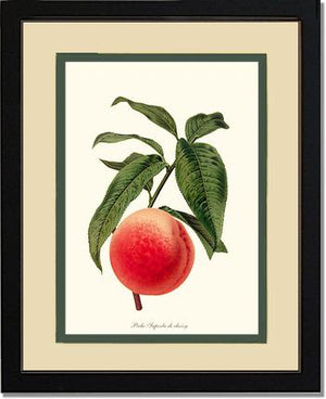 Fruit Print: Peach, Superb de Choisy