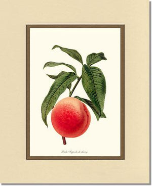 Peach, Superb de Choisy