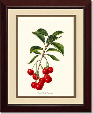 Fruit Print: Cherries, Belle L'herissier