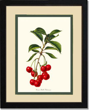 Cherries, Belle L'herissier