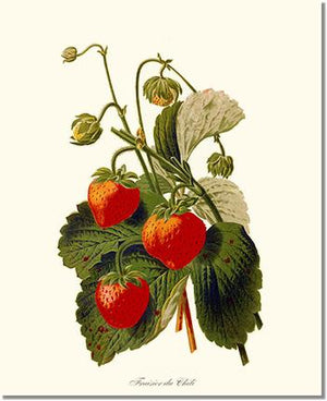 Fruit Print: Strawberries