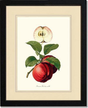 Fruit Print: Apple, Roi Tres Noble