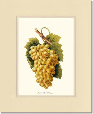 Fruit Print: Grape, Henab Turqui