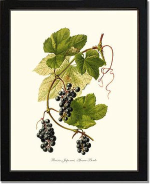 Fruit Print: Grape, Wild
