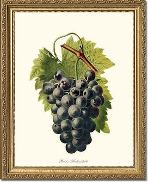 Grape, Kechmishali
