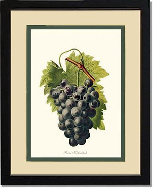 Fruit Print: Grape, Kechmishaku