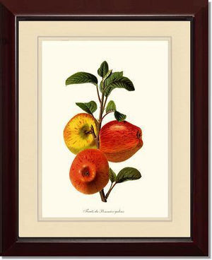 Fruit Print: Apple, Galeux