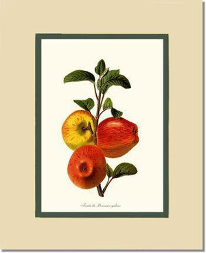 Apple, Galeux