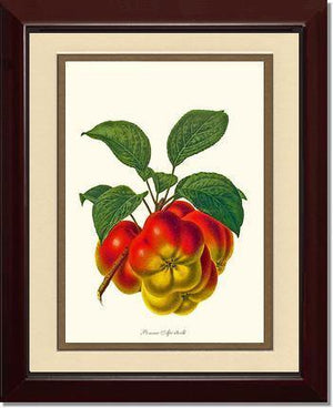 Fruit Print: Apple, Apietoile