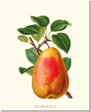 Fruit Print: Pear, Charles Earnest