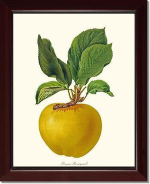 Fruit Print: Apple, Rossignol