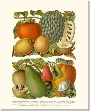 Fruit Print: Tropical Fruit
