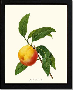 Fruit Print: Peach