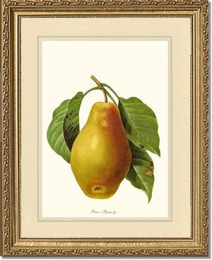 Fruit Print: Pear