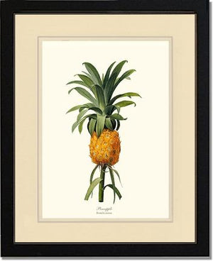 Fruit Print: Pineapple